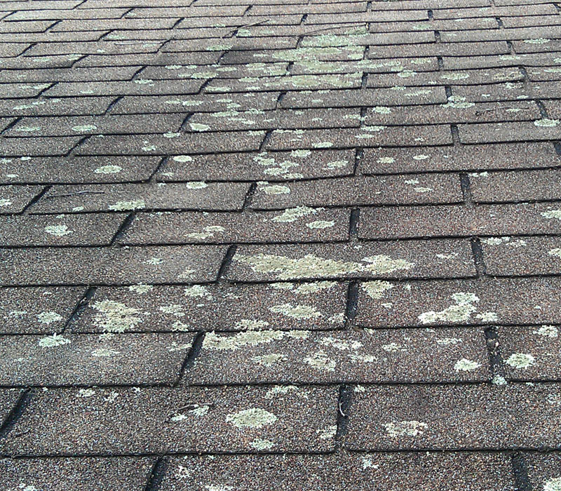 Lichen Removal Roof Cleaning Roof Coatings Roof