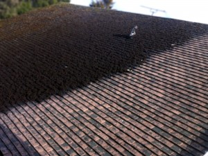 Roofman professional roof cleaning service.