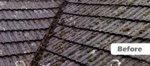 Example of a roof prior to receiving the Roofman fungicidal treatment.